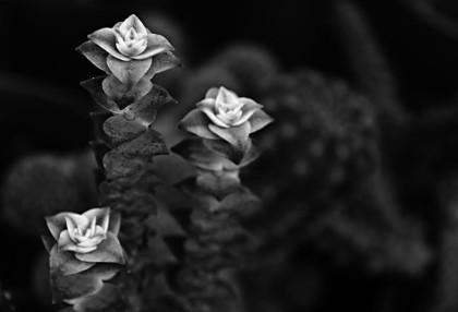 Naturaleza en Blanco y Negro 4