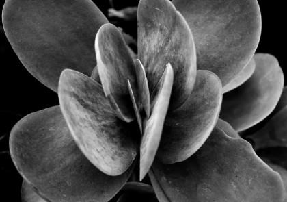 Naturaleza en Blanco y Negro 5