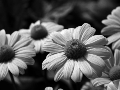 Naturaleza en Blanco y Negro 6
