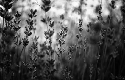 Naturaleza en Blanco y Negro 7