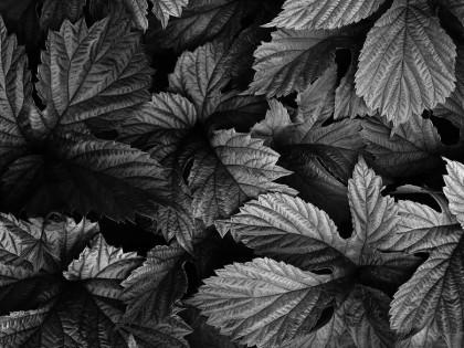 Naturaleza en Blanco y Negro 8