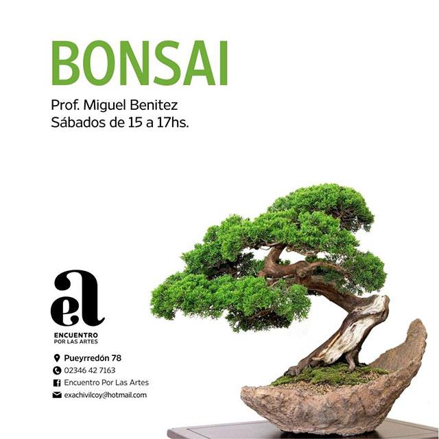 bonsai_
