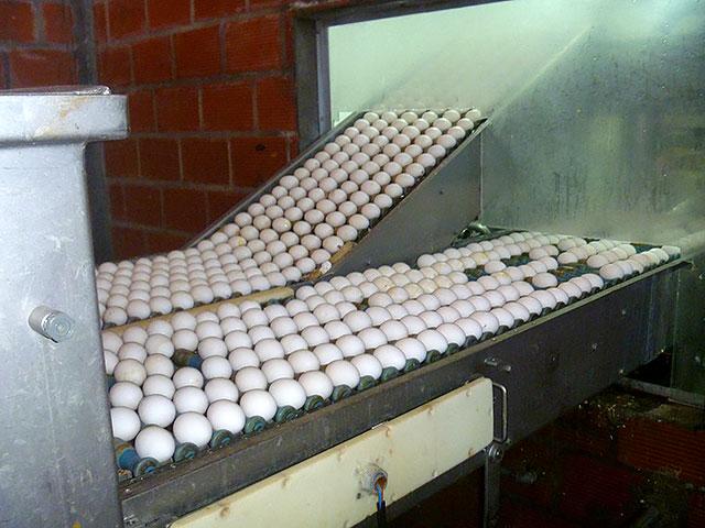 La-directora-de-Producción-visitó-la-empresa-avícola-Tanacorsa-S.A.-3