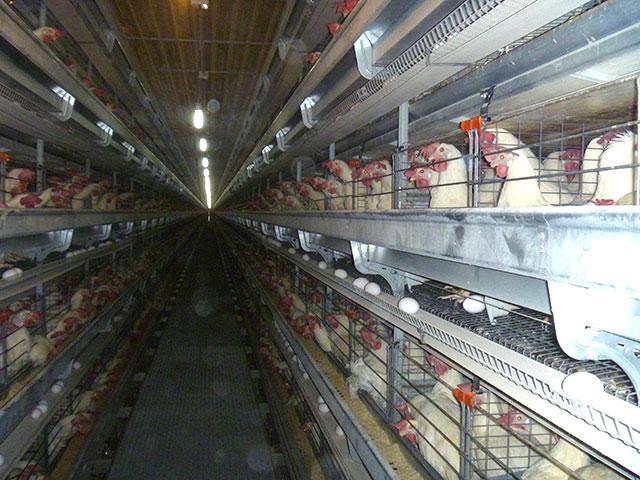 La-directora-de-Producción-visitó-la-empresa-avícola-Tanacorsa-S.A.-4