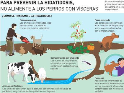 ZOONOSIS: Para cortar el ciclo de la hidatidosis no alimentemos a los perros con vísceras crudas