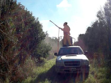 La Dirección de Producción y EDEN S.A continúan trabajando en la fumigación de lila